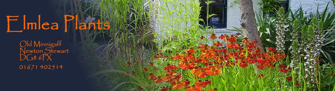 Elmlea Plants